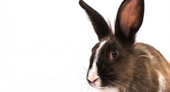 3D Printing: from bunnies to business innovation