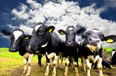 Revolutionising Australia's AgriFood sector with data